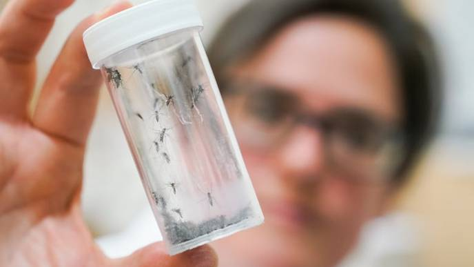Mosquito Season Renews Concerns About Rare But Deadly EEE Virus