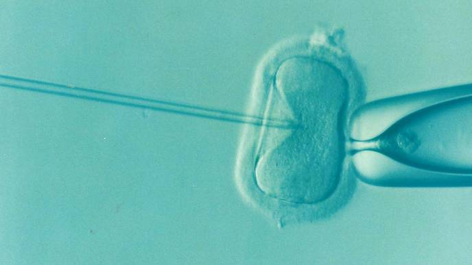 IVF Success Rates Higher at Clinics That Provide More Outcomes Data
