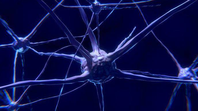 Frequent Strenuous Exercise Increases Risk of Motor Neurone Disease