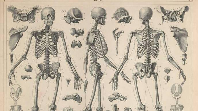 Bones Can Change Shape to Limit Risk of Fracture