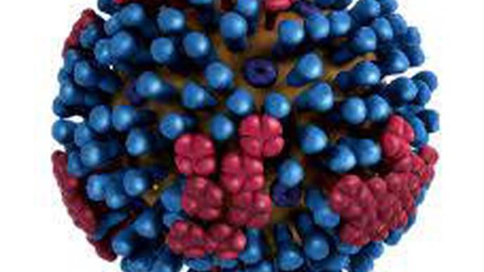 Fast-Spreading Mutation Helps Common Flu Subtype Escape Immune Response