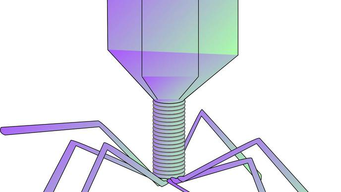 Scientists Uncover Prophage Defense Mechanisms Against Phage Attacks in Mycobacteria