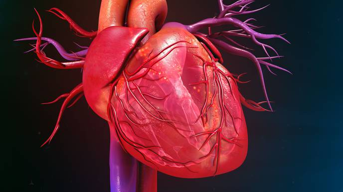 Heart Failure Prevention Strategies Key for Patients with T2D