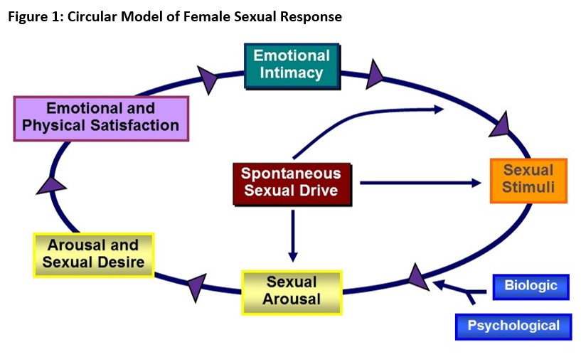 The biopsychosocial model of female sexual response recognizes the  influence of and interplay between, biologic, psychologic, sociocultural,  ...